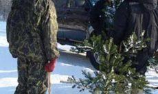 В Приднестровье лесные хозяйства усилили охрану хвойных деревьев