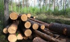 Лесоматериалы из Новгородской области